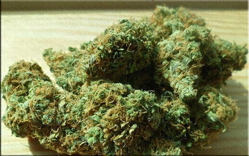 تاثير و مكونات مخدر الفودو الجديد